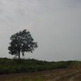 美瑛の丘 哲学の木